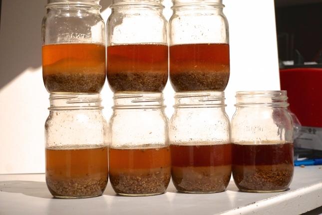 Top L to R: Munich 10L, Honey malt, Munich 30-35L Bottom: My munich samples 1-4